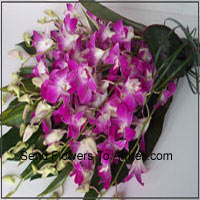 Bunch Of Orchids With Seasonal Fillers
