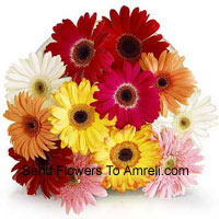 Bunch Of 12 Assorted Colored Gerberas