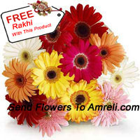 productBunch Of 12 Assorted Colored Gerberas With A Free Rakhi