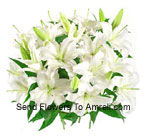 Bunch Of White Colored Lilies